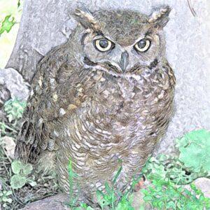 dieren in het woud ― symbool voor natuurlijke wijsheid