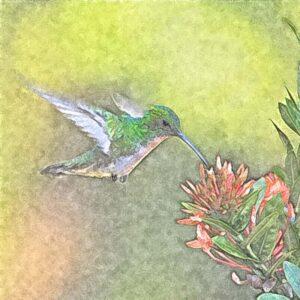 de kolibrie ― symbool voor vliegende vreugde
